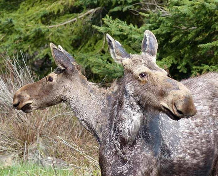 Human And Animal Mutations Were Caused By This Nuclear Disaster Chernobyl Animals Mutation