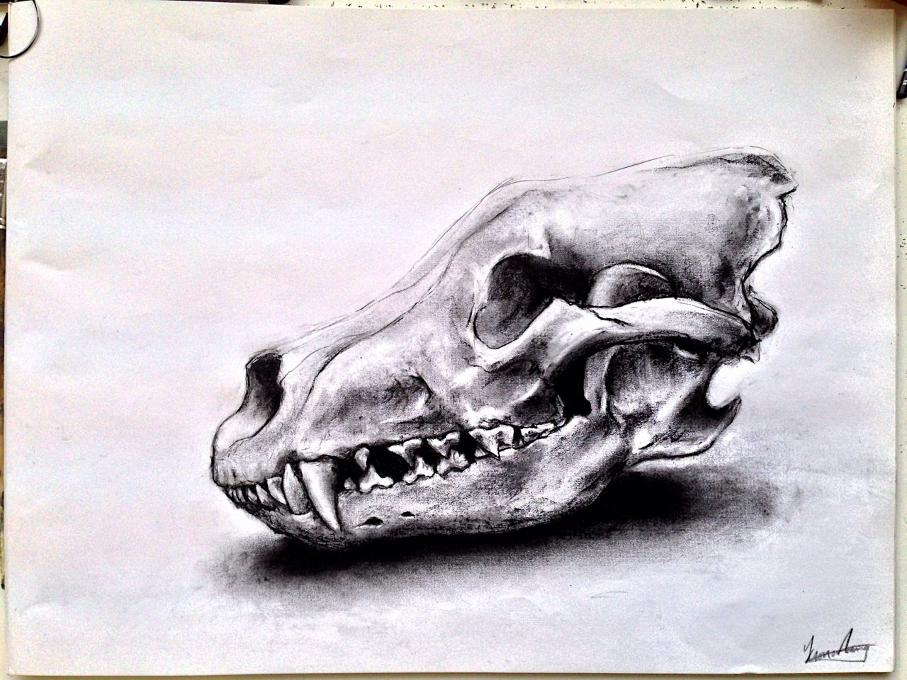 Animal Skull Drawings