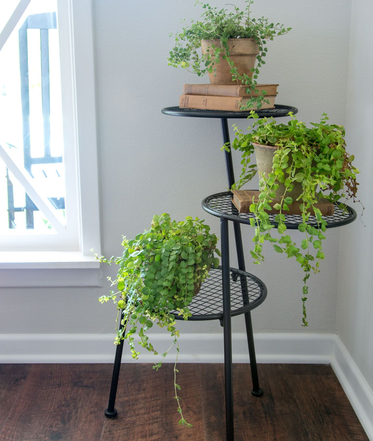 Plants Of Season 4 Etagere Plante Decoration Maison Et Plante