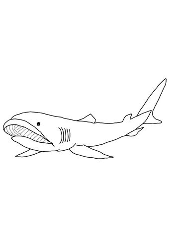 Megamouth Shark Coloring Page From Sharks Category Select From