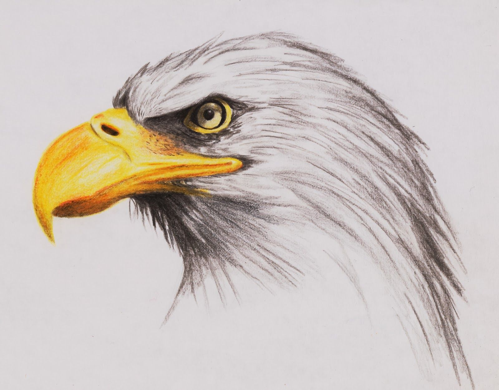 Detailed Egale Drawings - Yahoo Image Search results | For my art ...