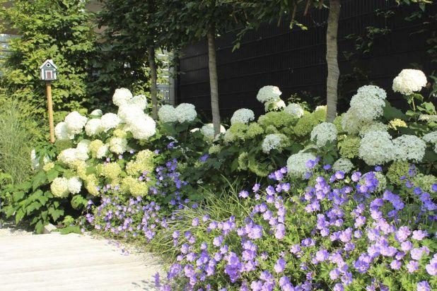pflanzenkombination in wei und blau hortensien und storchschnabel flowers and gardens. Black Bedroom Furniture Sets. Home Design Ideas