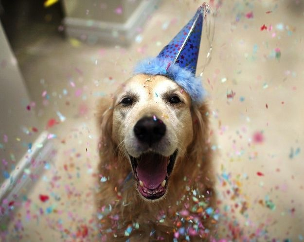 24 Signs Your Person Thinks You Re Human Happy Dogs Dog Birthday Dog Birthday Hat