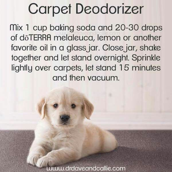 Carpet Deodorizer Carpet Deodorizer Carpet Cleaning Quote Dry Carpet Cleaning