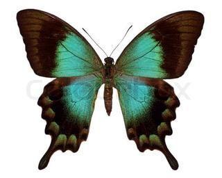 Image of 39 symmetry butterfly nature 39 KidsButterfly