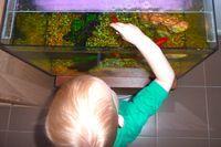 Fish tank - how we montessori