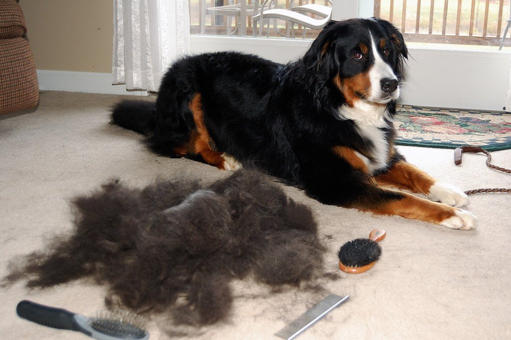 The 20 Best Pet Hair Vacuums in 2020 That Actually Work