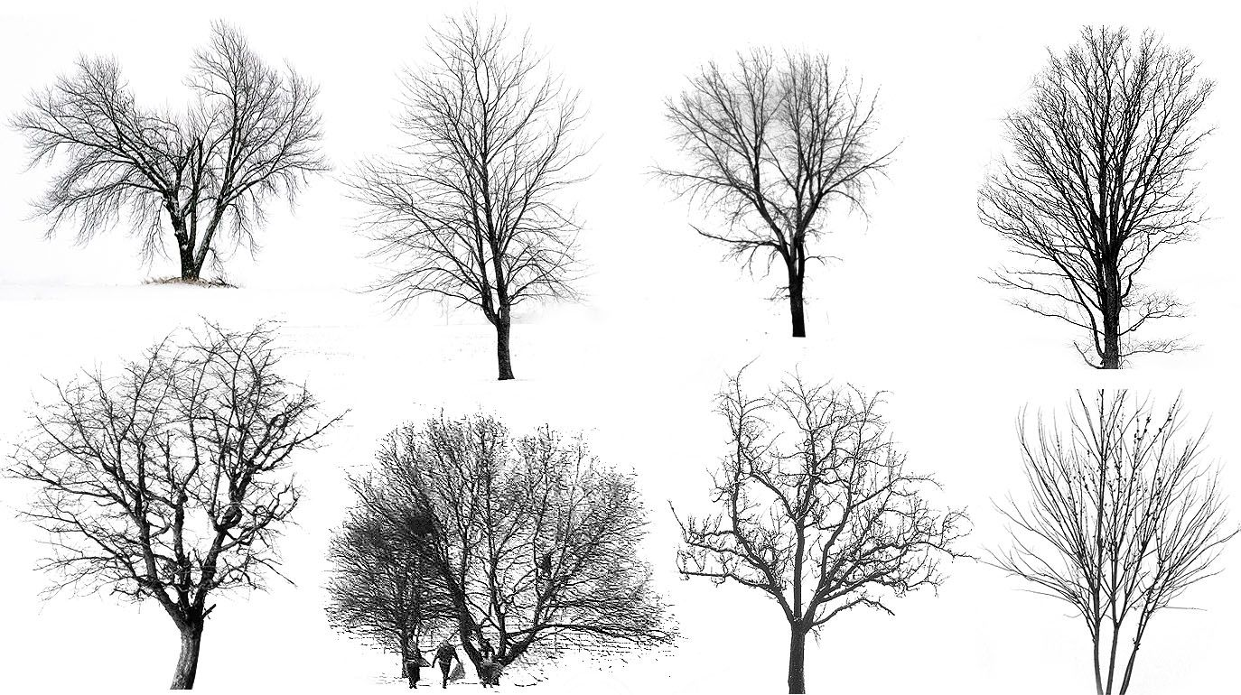 Winter Special 4 Visualizing Architecture Architectural Trees Tree Drawing Snow Illustration
