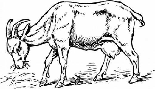 The Three Billy Goats Gruff Farm Animal Coloring Pages Goats Animal Coloring Pages