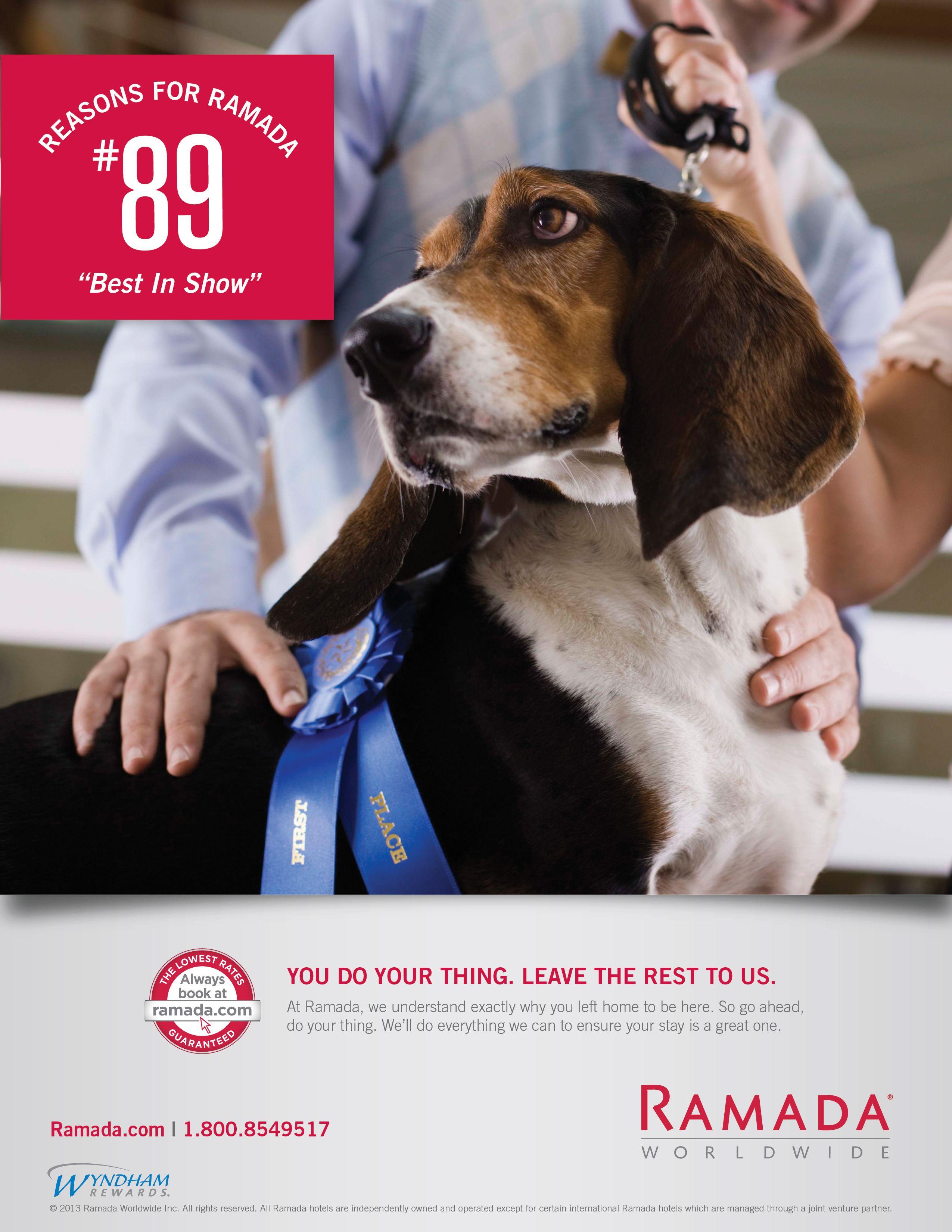 Pin By Hank Kosinski On Print Work Online Pet Store Pet Supplements Pets