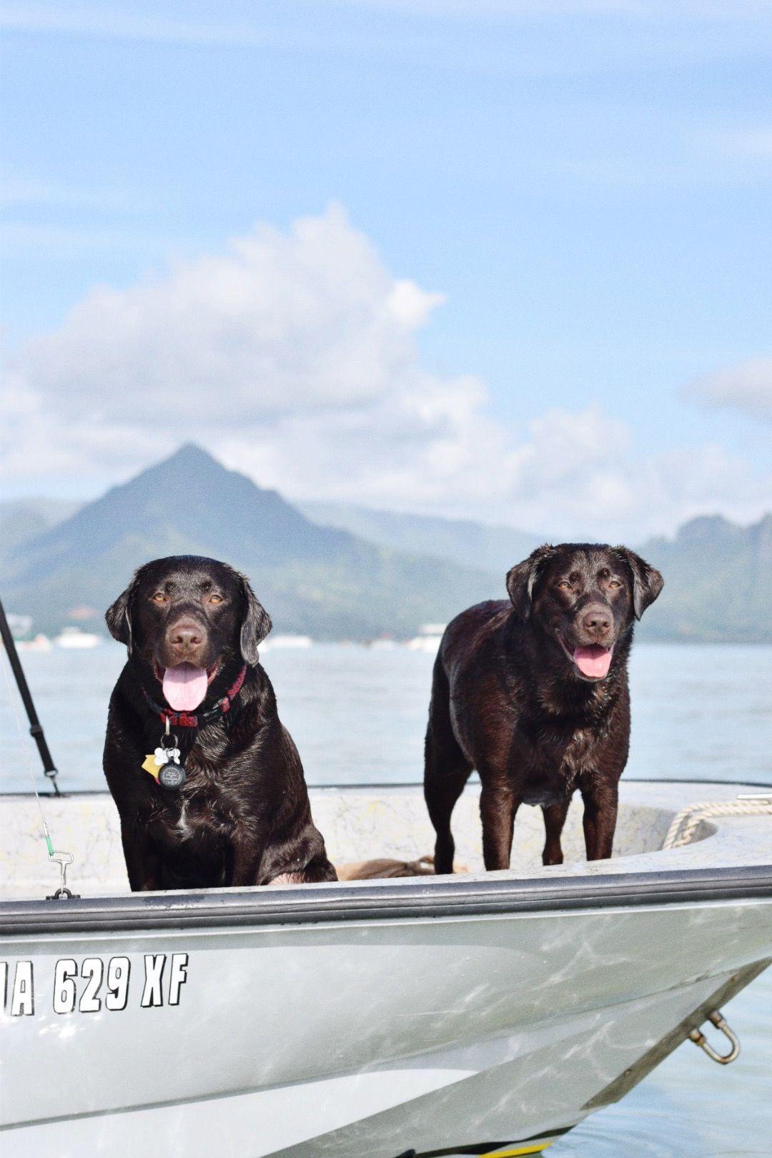 A Quick Weekend Recap 3 Amazing Sales To Shop Retriever Dog Dogs Labrador Retriever