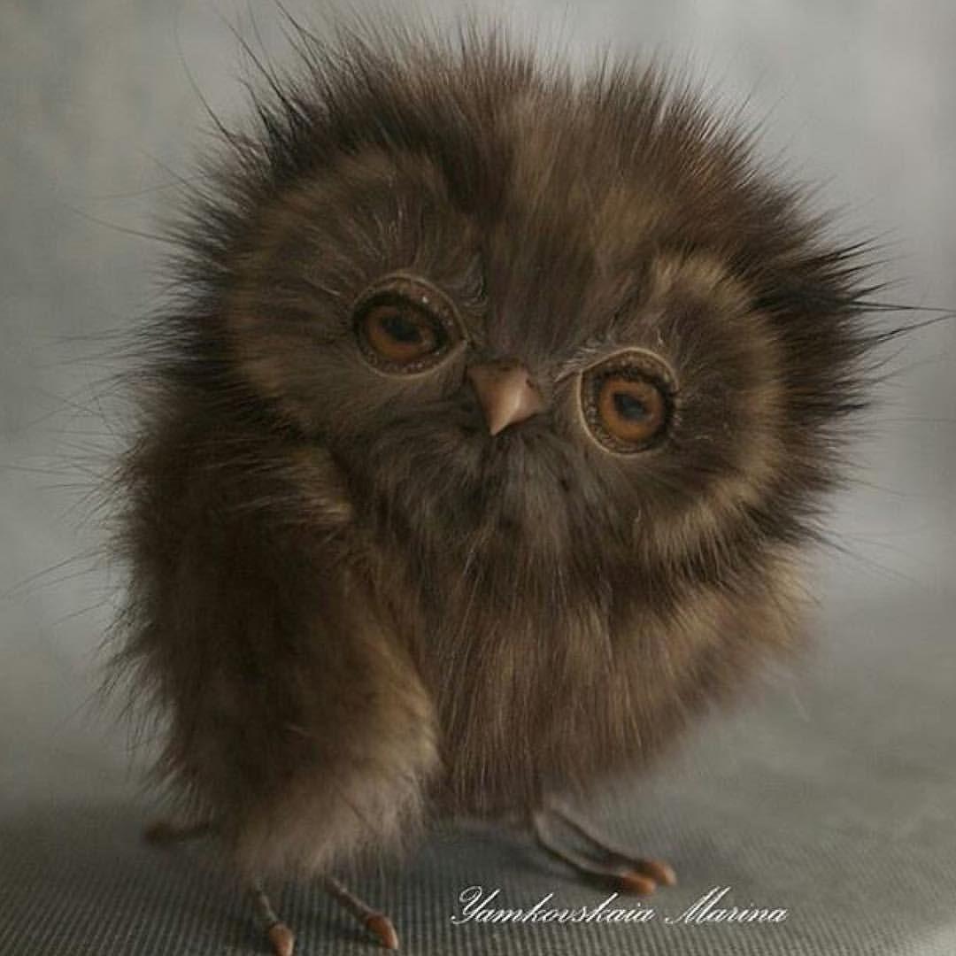 Baby animals instagram - Animal