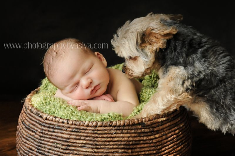 Newborn with dog 001 http photographybyasiya com blog 2012 04 day 10 bronx nyc newborn baby photographer bronx new york