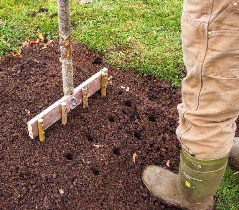 Potager Garden Blogs: #usturoiului #plantarea #fasingur #trucuri #pentru #recolt
