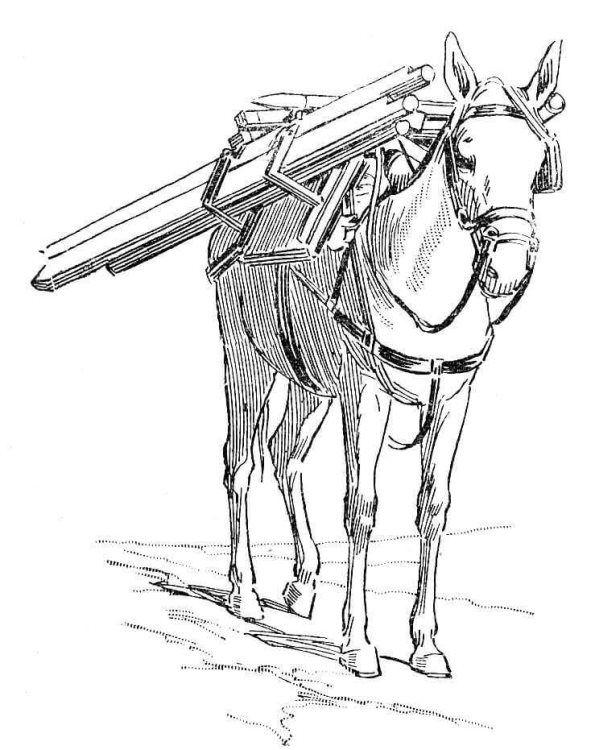 Coloring Page Donkeys Ezels