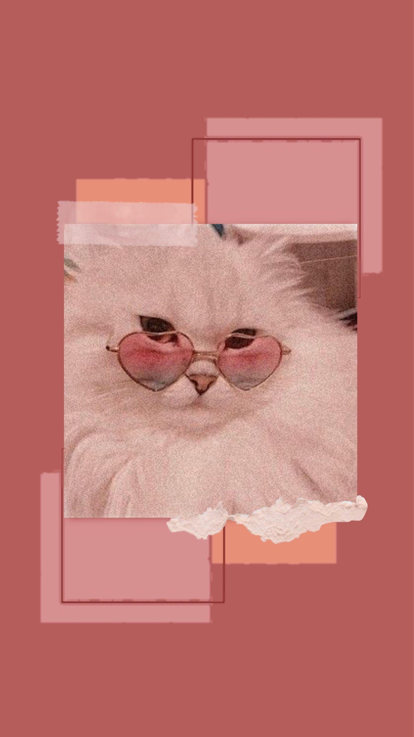wallpaper cat wallpaper gambar kucing aesthetic
