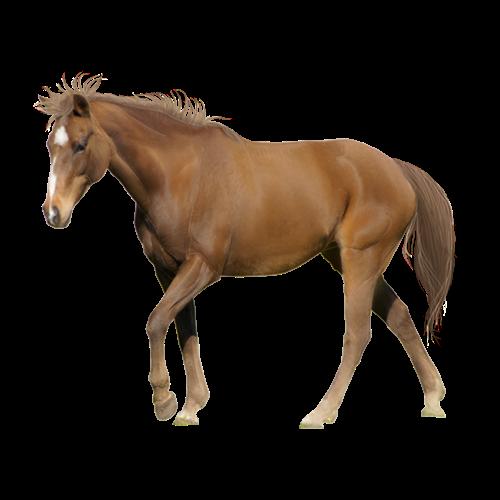 Brown Horse Png Image Download Horse Png Horse Clipart Transparent Horses Brown Horse Clip Art