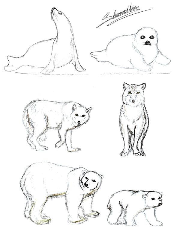 Arctic Tundra Animals Coloring Arctic Tundra Animals Arctic Tundra Arctic