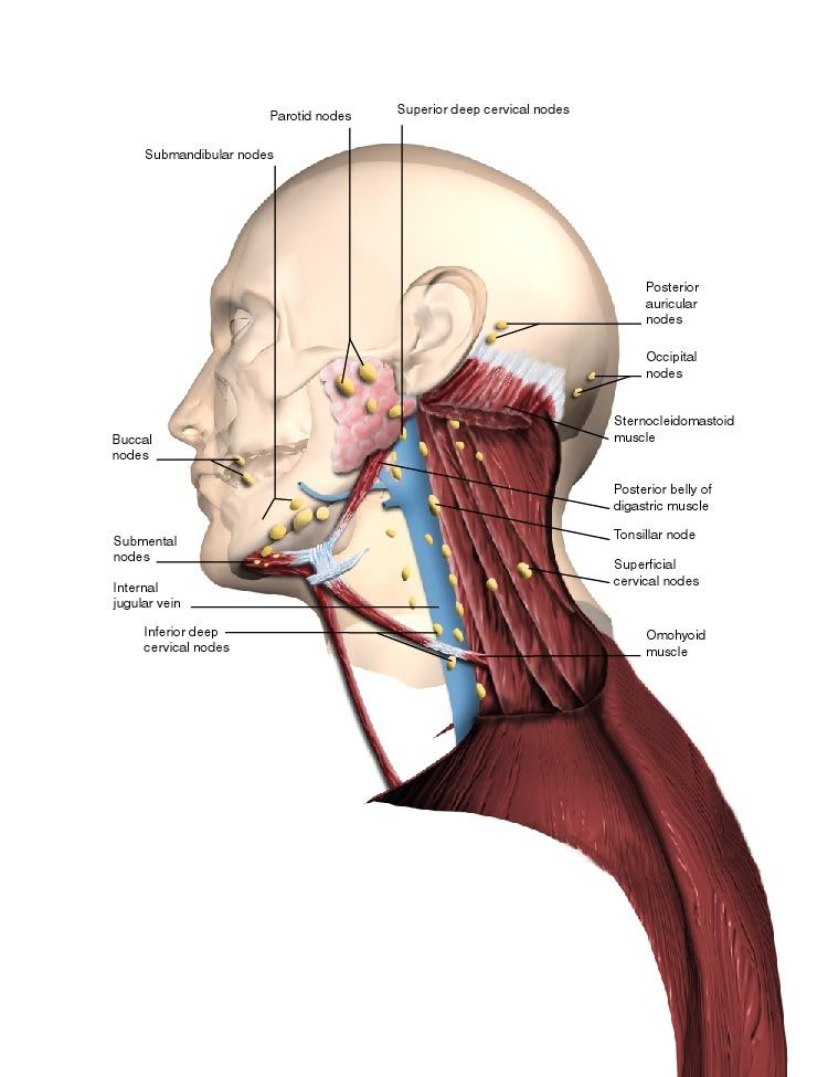 However It Is Possible To Have Enlarged Lymph Nodes And Swelling In
