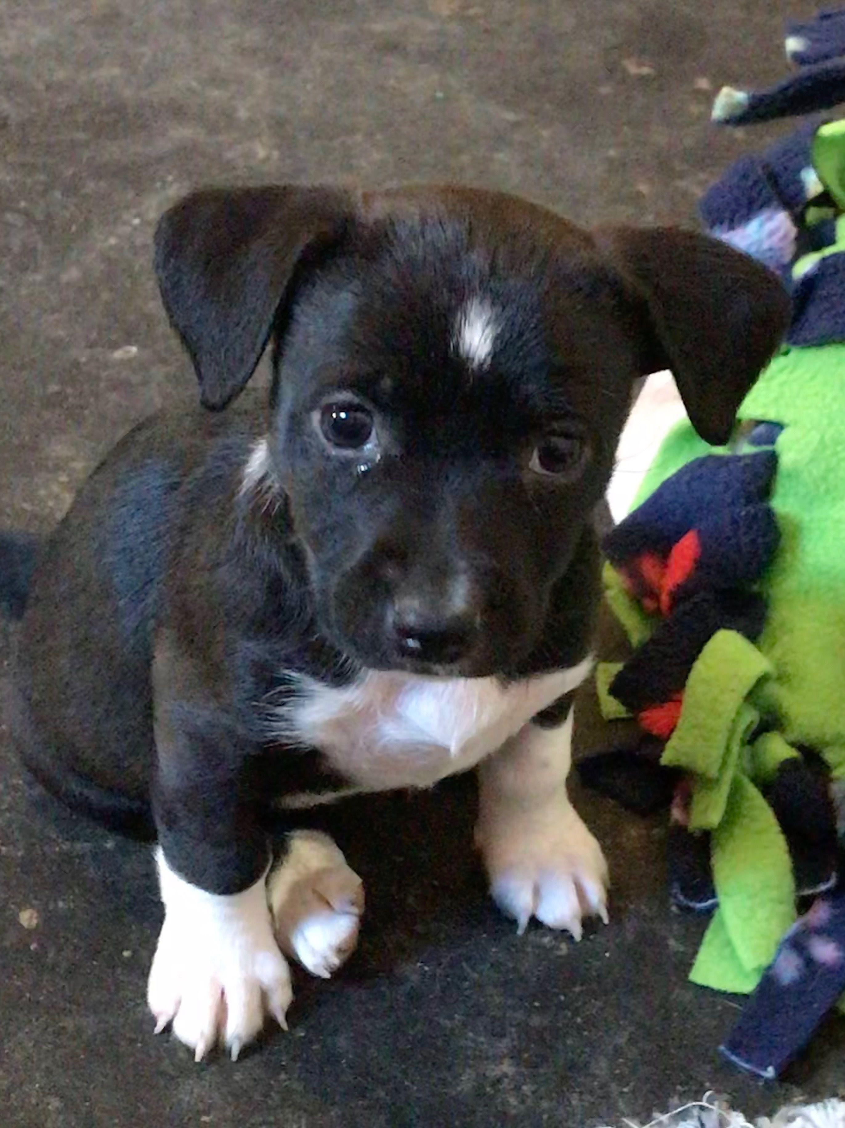 Adopt cindy on petfinder animals pets animal rescue