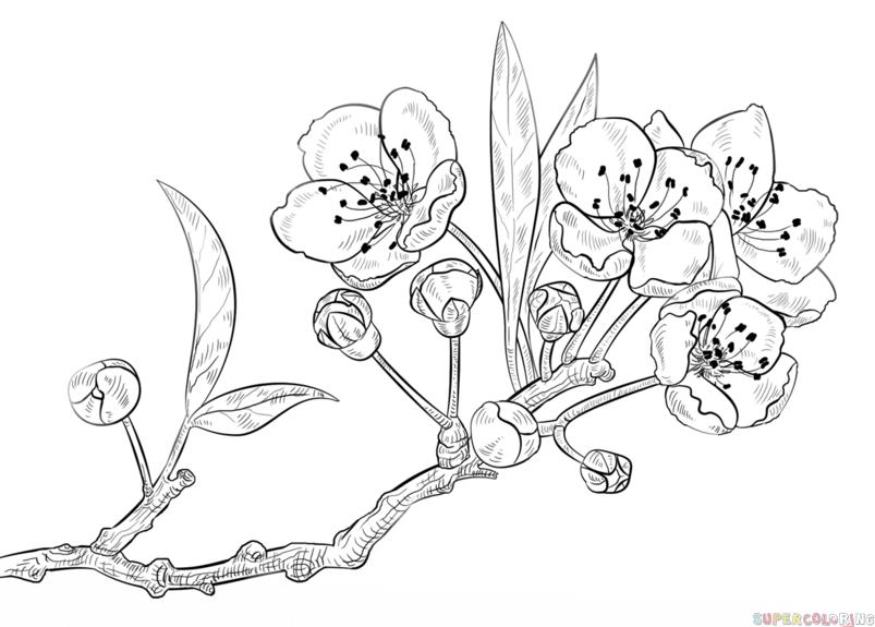 comment dessiner une fleur de cerisier etape par tape dessin tutoriels comment dessiner un. Black Bedroom Furniture Sets. Home Design Ideas