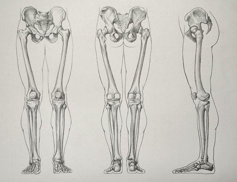 Leg-Bones-16-5-by-Drawing-Academy.jpg (762×586)   Bones   Pinterest ...