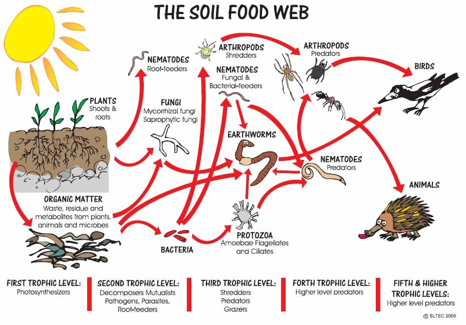 People often judge the health of soil by how many ...