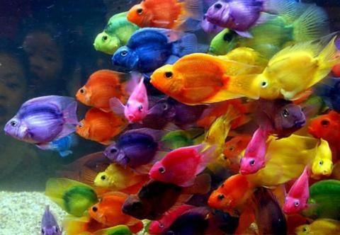 Pin by Sonia Landry on Colors   Colorful fish, Parrot fish