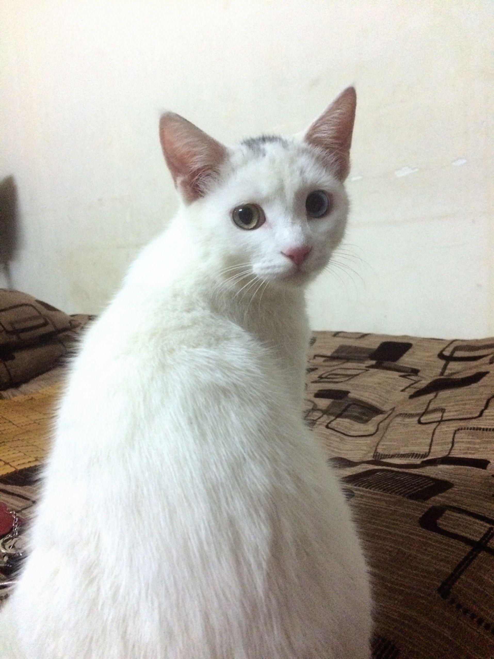 Nasus The Cat Co Sở Thich La Ngủ Ngủ Bất Chấp Tất Cả Ngủ Quen Ngay Thang Ngủ Say Me Quen đời Khi Ngủ Thường Hay Khoe Hang Nh Animals Beautiful