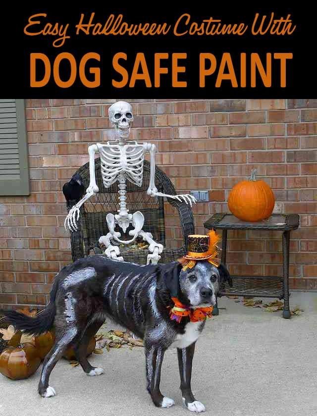 An easy halloween costume with dog safe paint dog halloween pet an easy halloween costume with dog safe paint solutioingenieria Choice Image