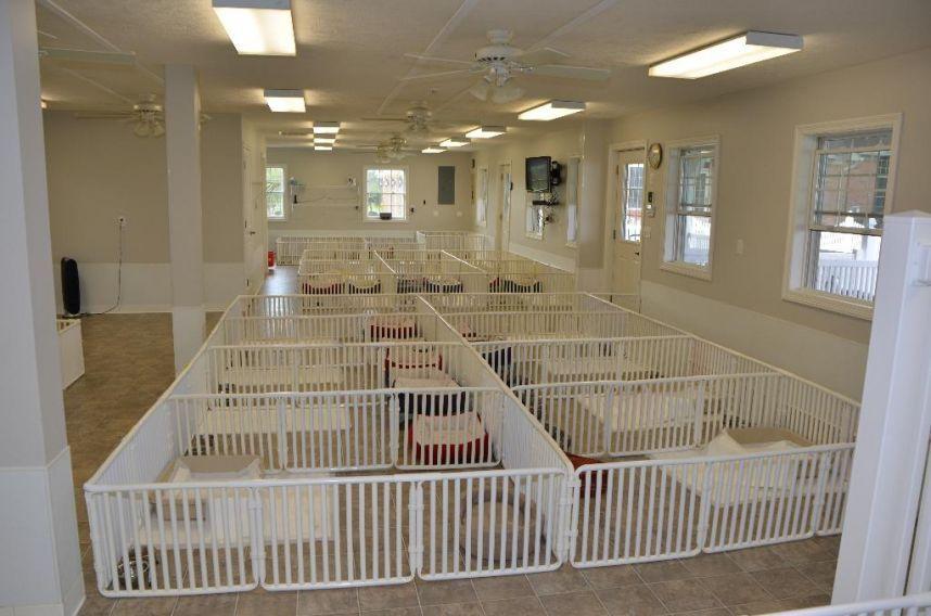 plastic indoor large dog cages | Pet Recereation | Pinterest | Dog ...