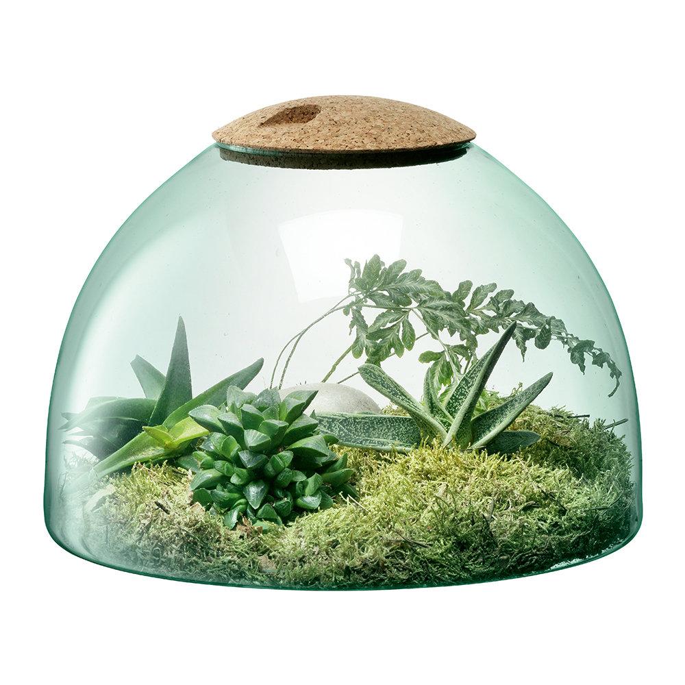 More Mixed Lot 15 Live Moss Plants,Great for Aquariums,Terrariums,Dish Gardens