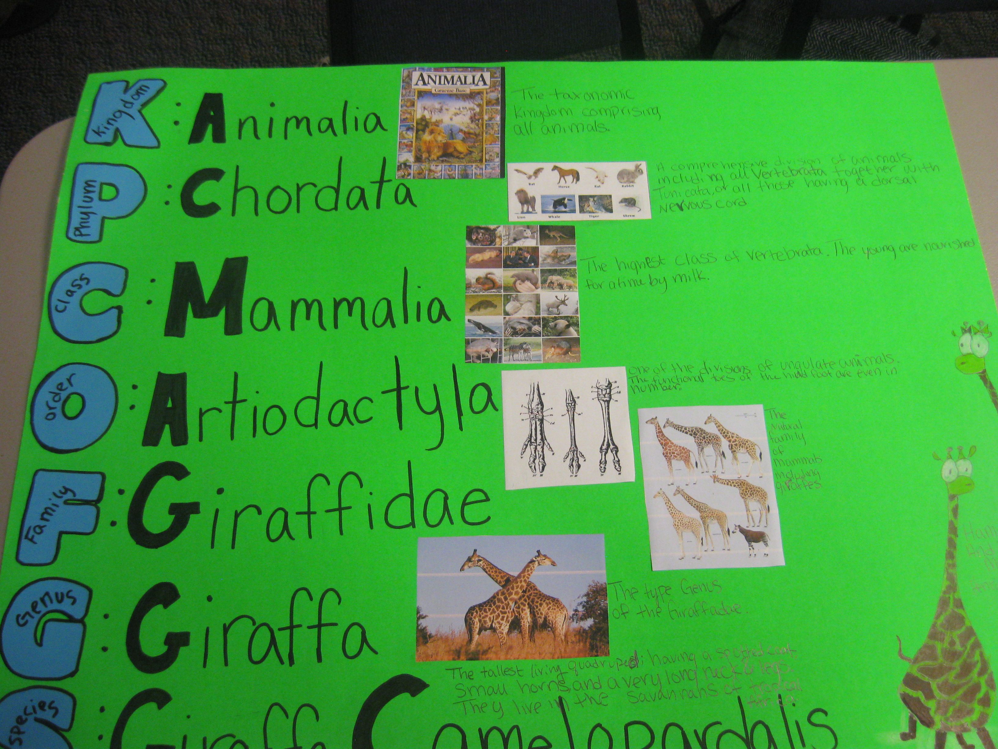 Linnaeus Taxonomy Classification Project Cc Challenge B