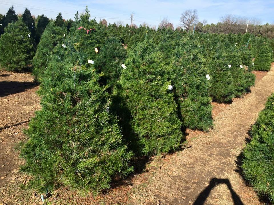 Owasso Tree Farm Tree Farms Plants Farm
