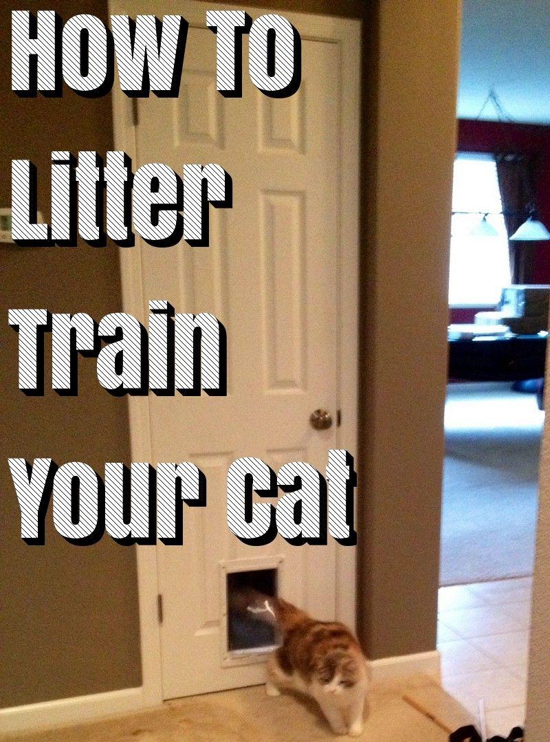 How To Teach Your Cat Use Litter Box Litter Box Litter Litter Tray