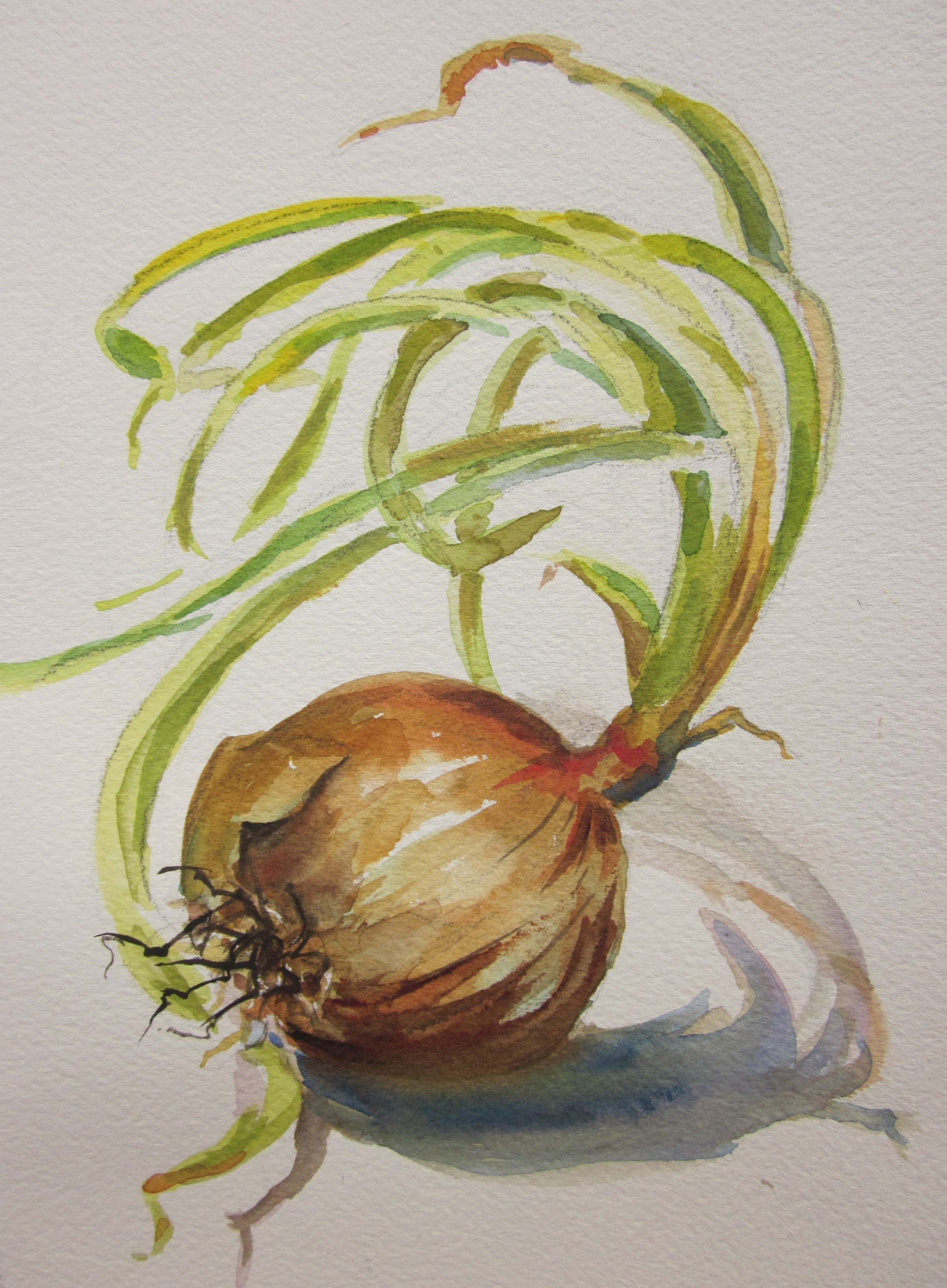 Watercolor Onions Florals Still Life Vegetable Painting