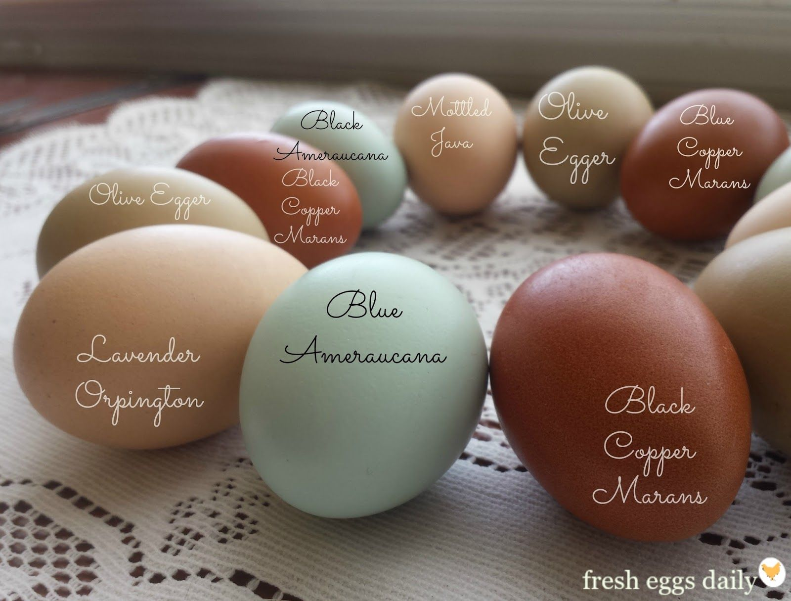 A Rainbow Of Egg Colors Awesome Site Full Of Information