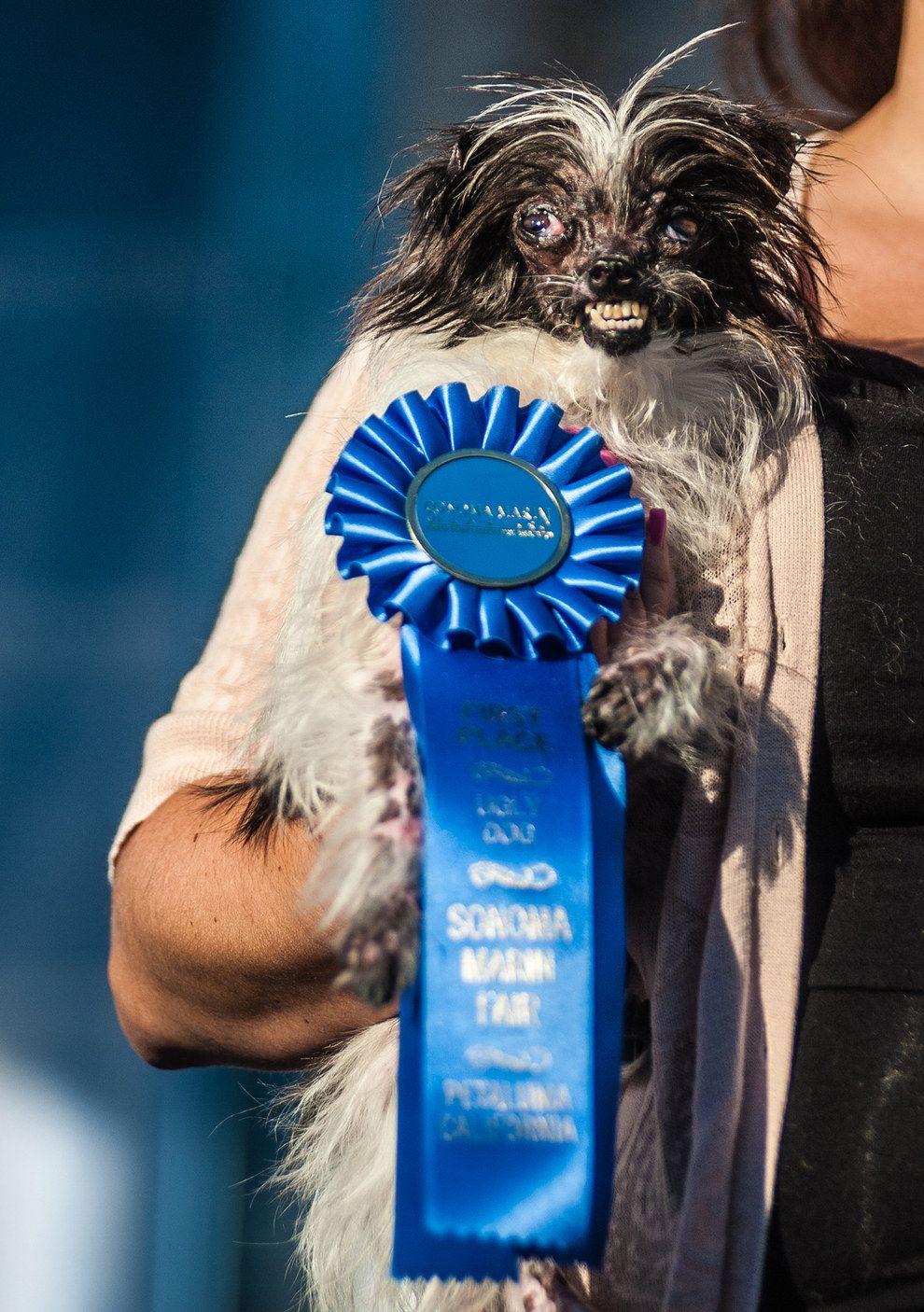 Dog Picture Contest Ideas