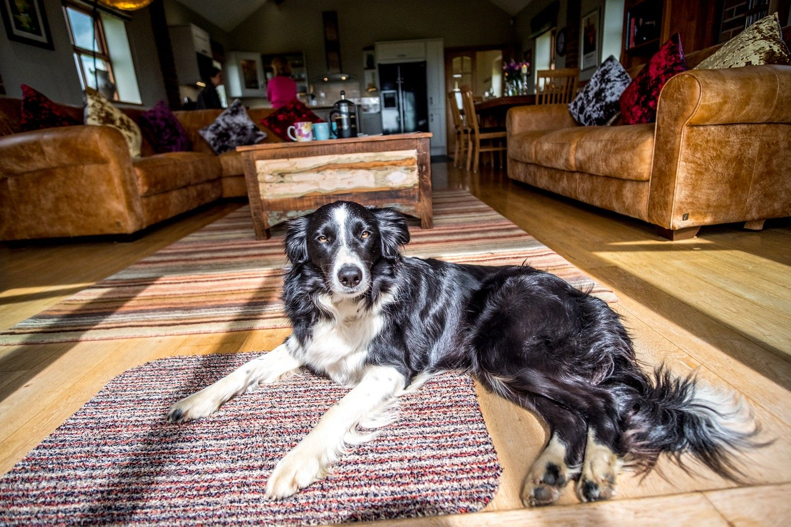 Dog Resting On Carpet Mill Granary Cottages Luxury Cottages In