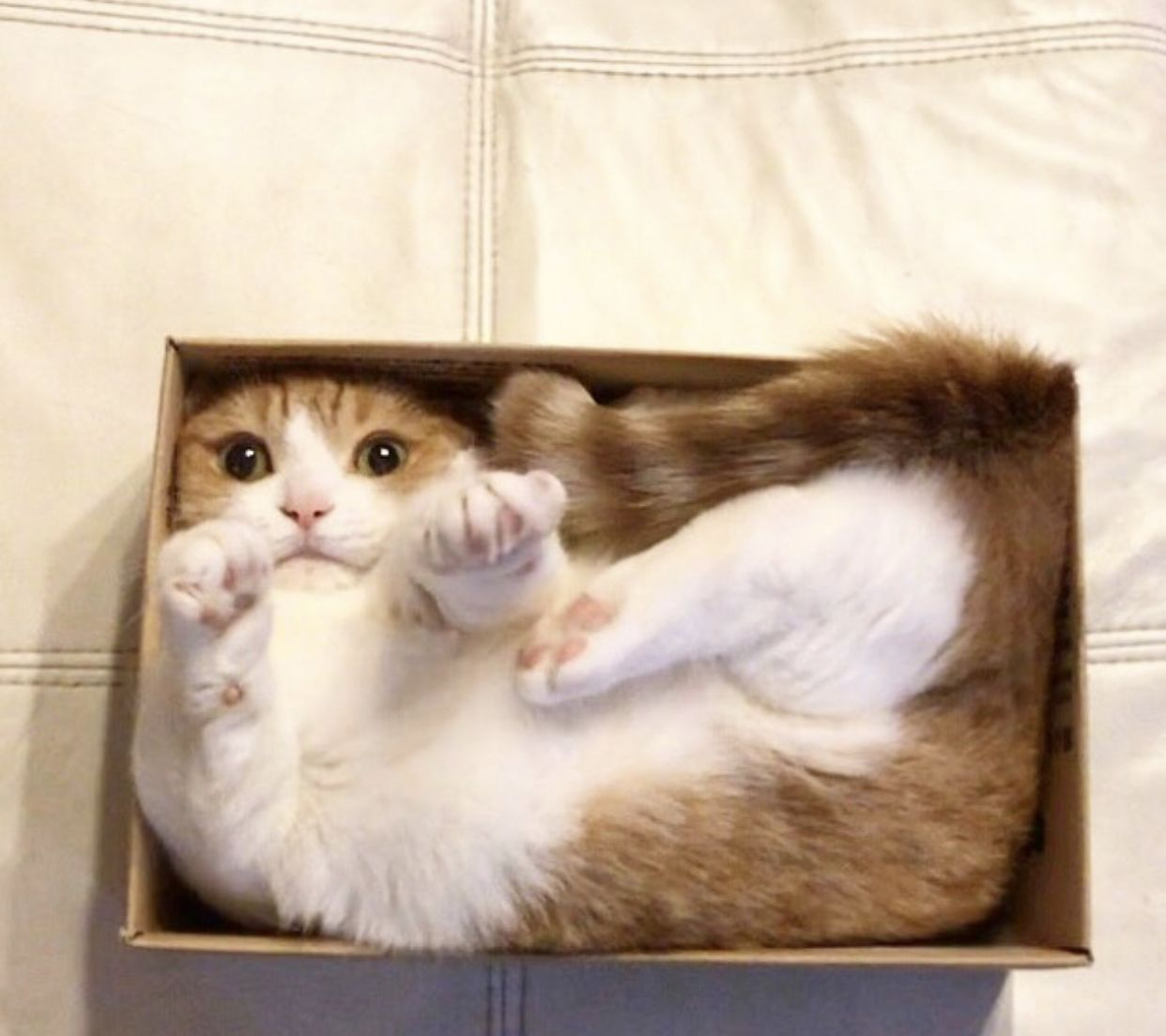 Beautiful Cat Loves Chilling In A Box Cat Box Catsloveboxes Beautiful Cat Cute Cats And Kittens Beautiful Cats