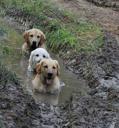 Mud baths are better than real baths.