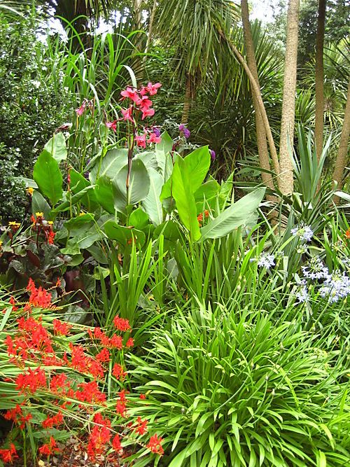 Dorset Jollies Day 3 Tropical Garden Design Tropical Garden Tropical Landscaping