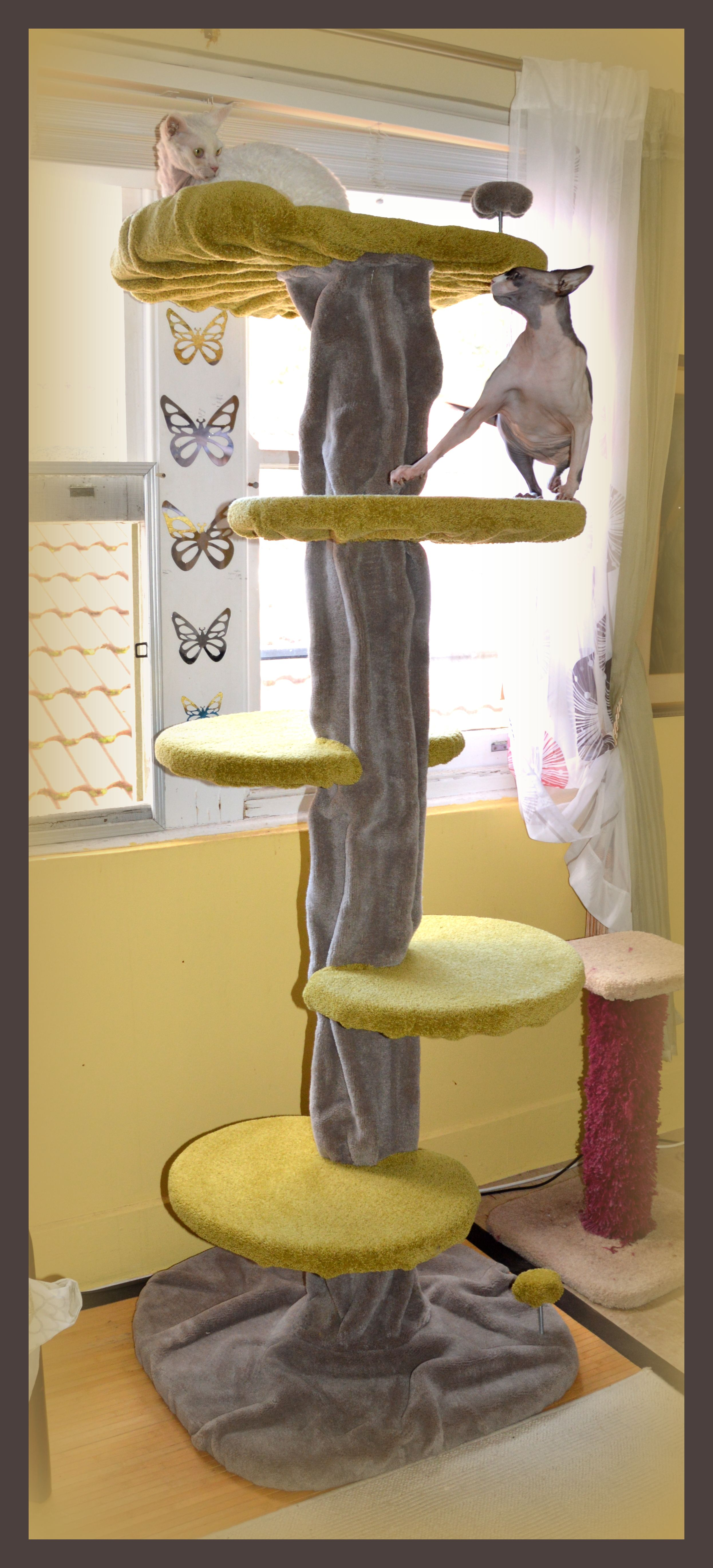 Cat scratching post Funky Cat Mega Tree with Devon Rex