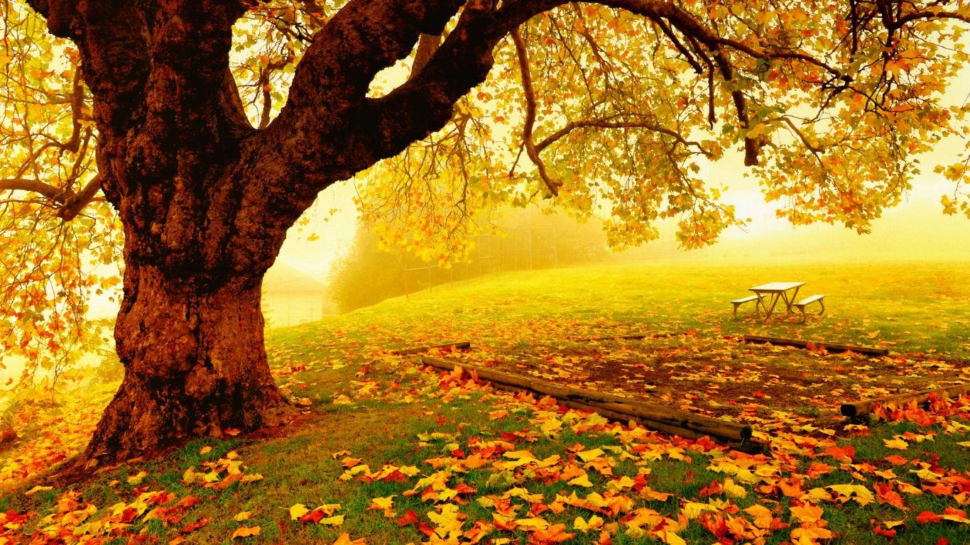 Jahreszeit Herbst Autumn Landscape Background Images Spring Landscape