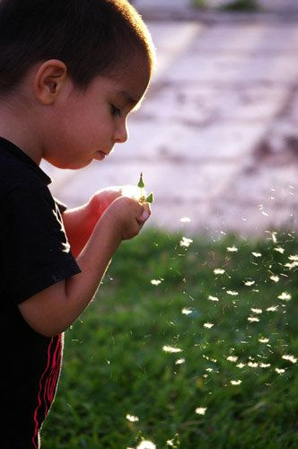 Check out this BabyCenter photo contest: Children with Flowers
