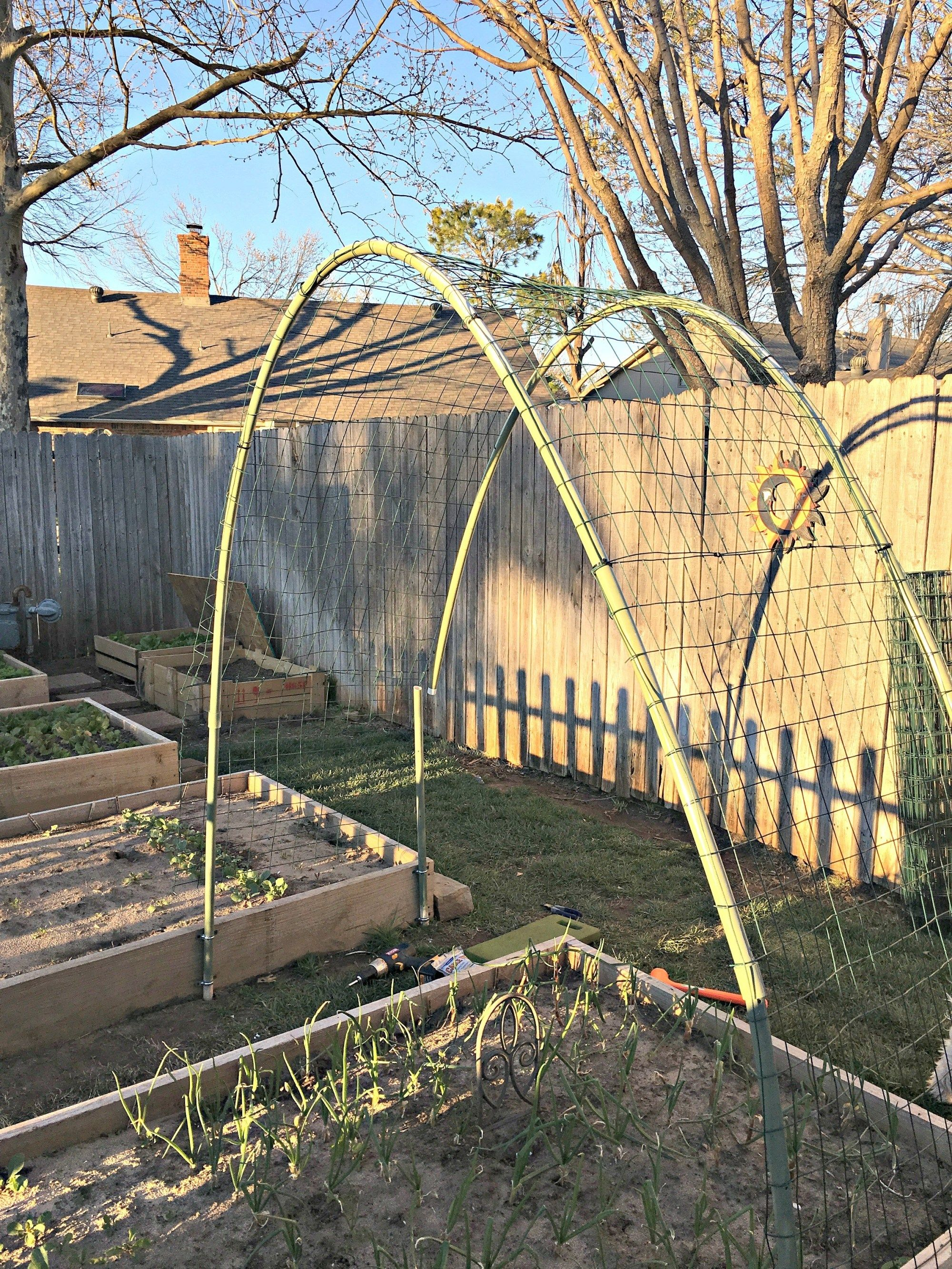 How To Build A Winter Squash Arch With Images Squash Trellis