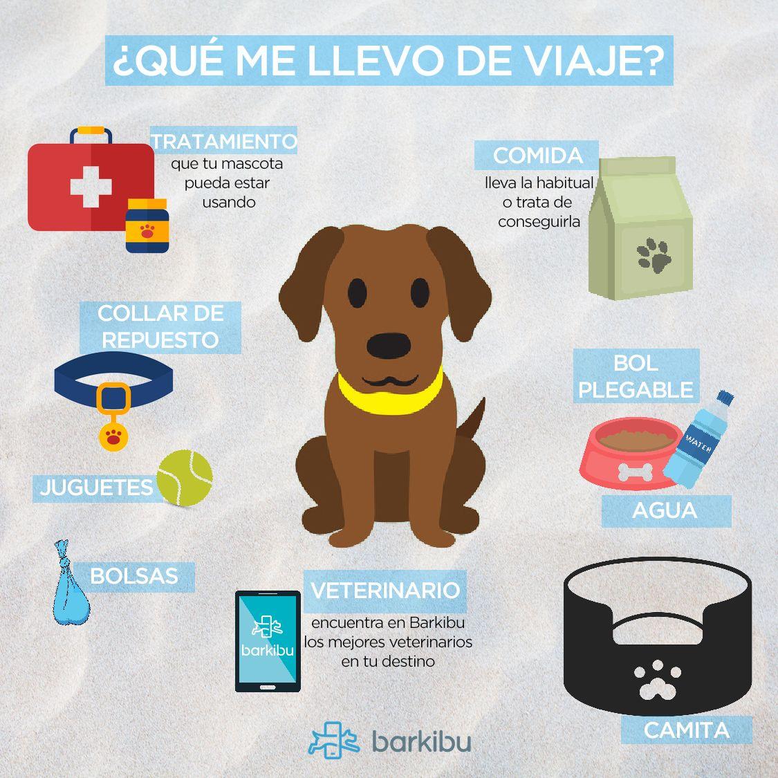Tipos De Collares De Castigo Para Perros 5 Consejos Para Viajar Con Tu Mascota Viajar Con Perros