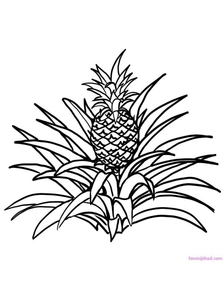 Pineapple Coloring Image Pdf (Dengan gambar)