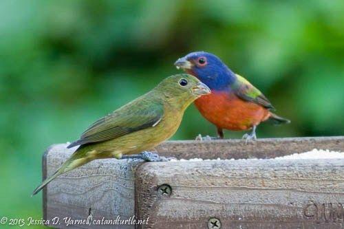 Central Florida Backyard Bird Identification   Bird ...