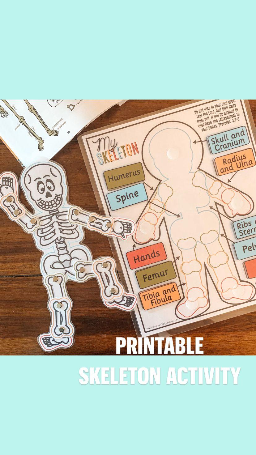 Printable Skeleton  Activity